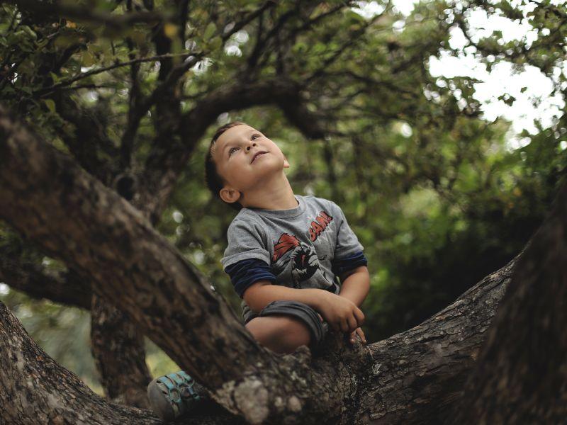 Chlapec sedící na stromě